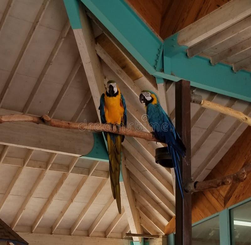 Pássaro exótico fotos de stock royalty free