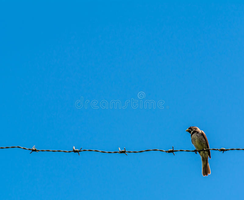 Pássaro & fio fotografia de stock