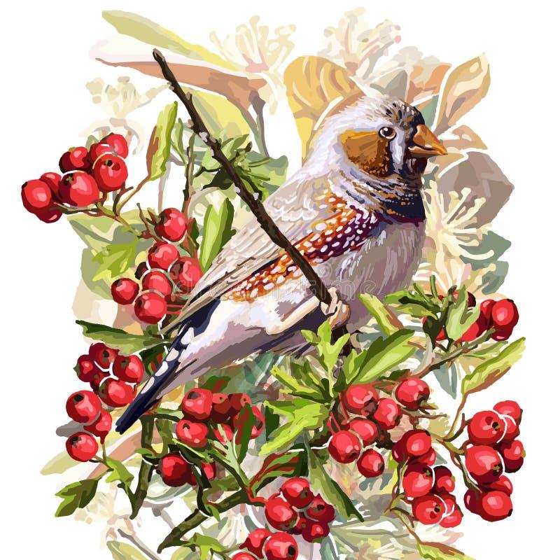 pássaro, flor e Rowan coloridos ilustração do vetor