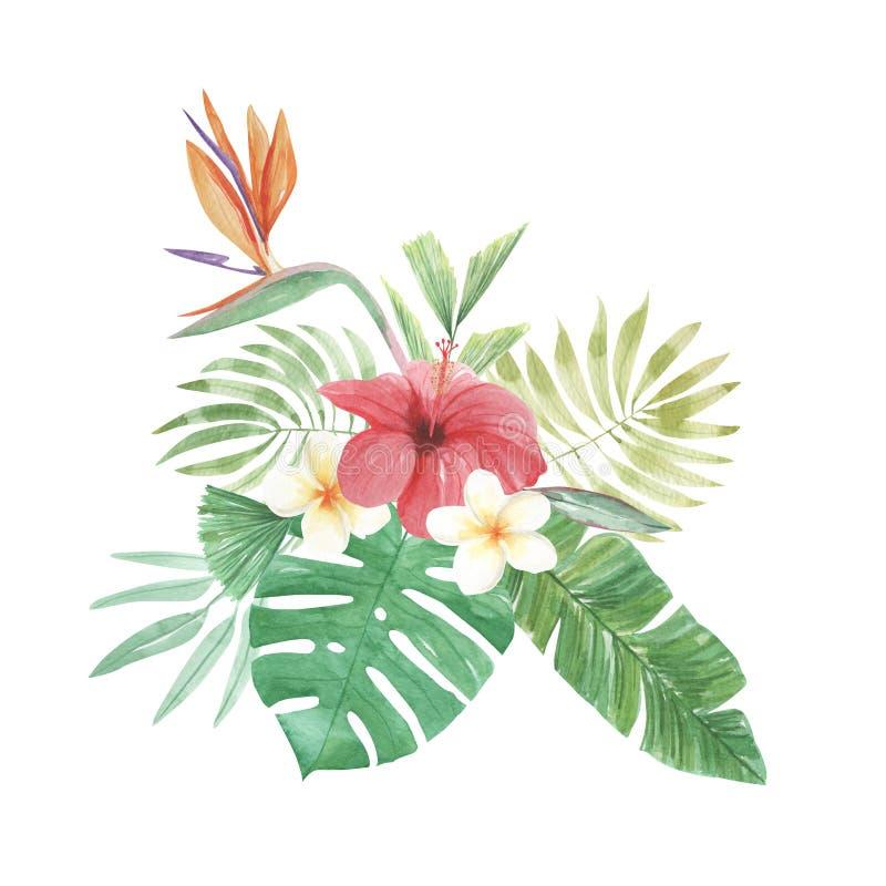 Pássaro floral das folhas das flores da aquarela do hibiscus tropical do Plumeria do paraíso ilustração royalty free