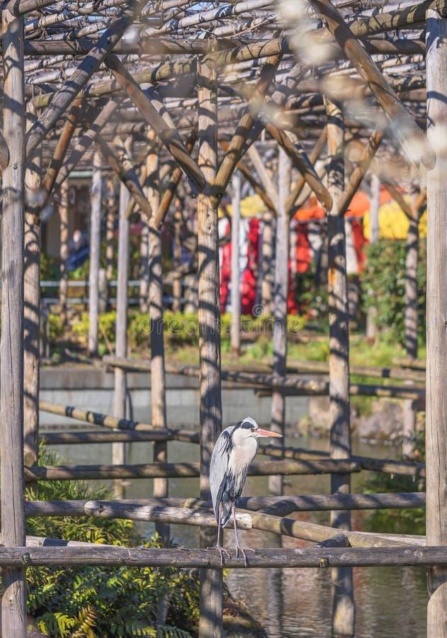 Pássaro guindaste em uma pergola sobre o lago do santuário Kameido Tenjin imagem de stock royalty free