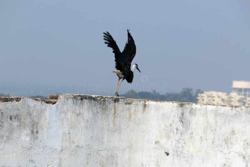 Pássaro impressionante foto de stock royalty free