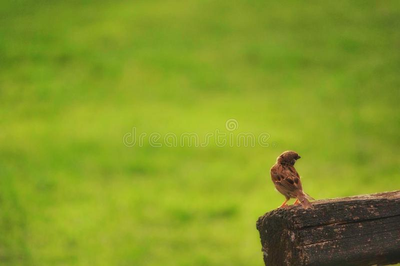Pássaro minúsculo imagens de stock