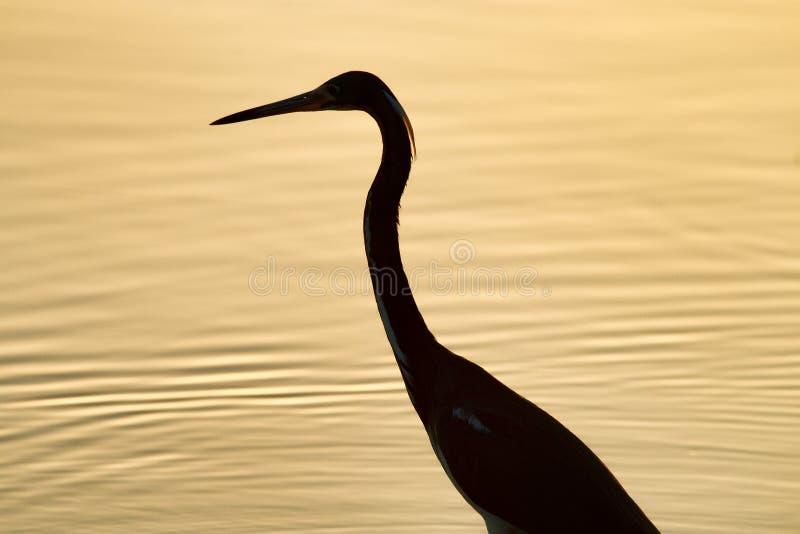 Pássaro mostrado em silhueta no por do sol imagem de stock