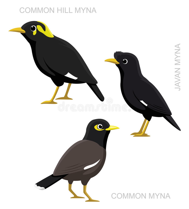 Pássaro Myna Set Cartoon Vetora Illustration ilustração stock