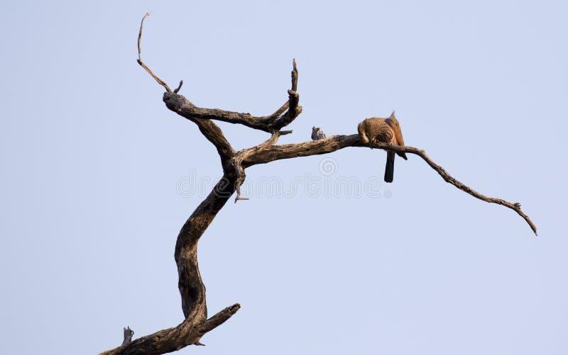 Pássaro não identificado em uma árvore imagem de stock royalty free