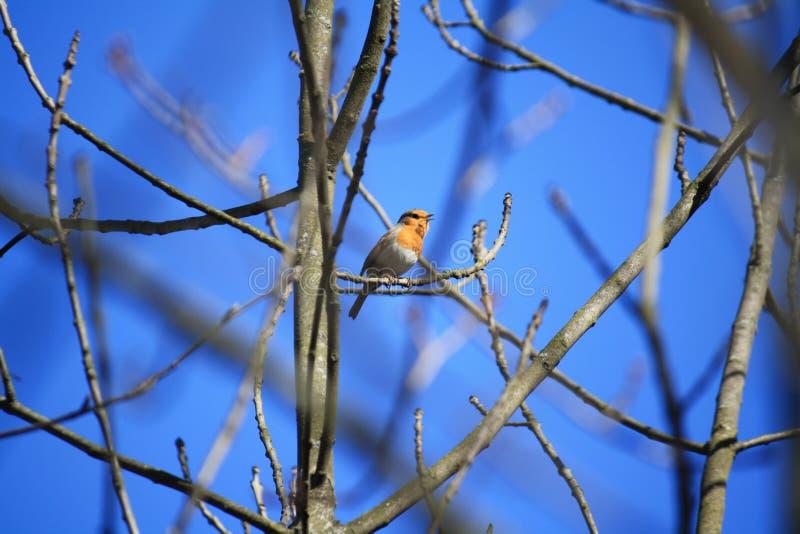 Pássaro na árvore foto de stock royalty free