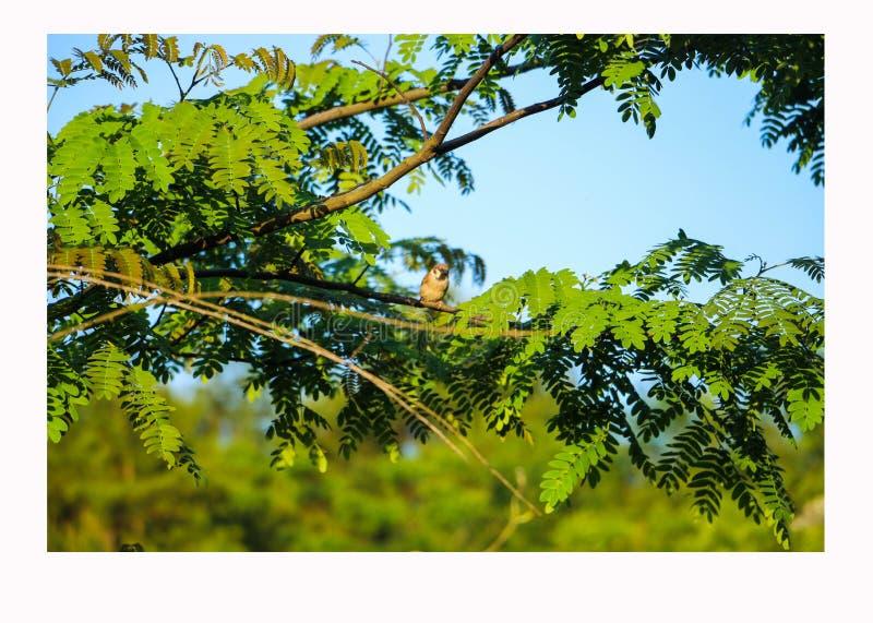 Pássaro na árvore, Pássaro na árvore, olhando para o galho abaixo foto de stock