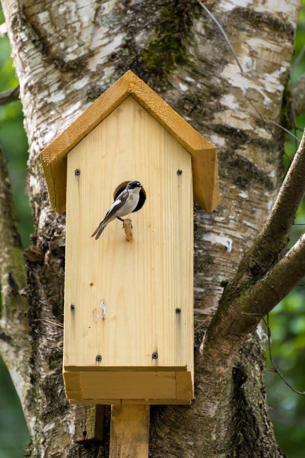 Pássaro na caixa-ninha fotos de stock