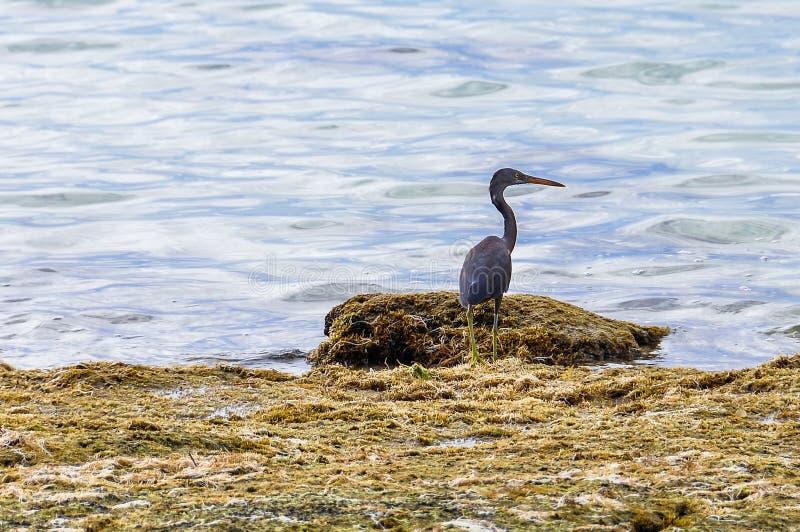 Download Pássaro Na Ilha Da Recompensa Em Fiji Imagem de Stock - Imagem de curso, praia: 80101037