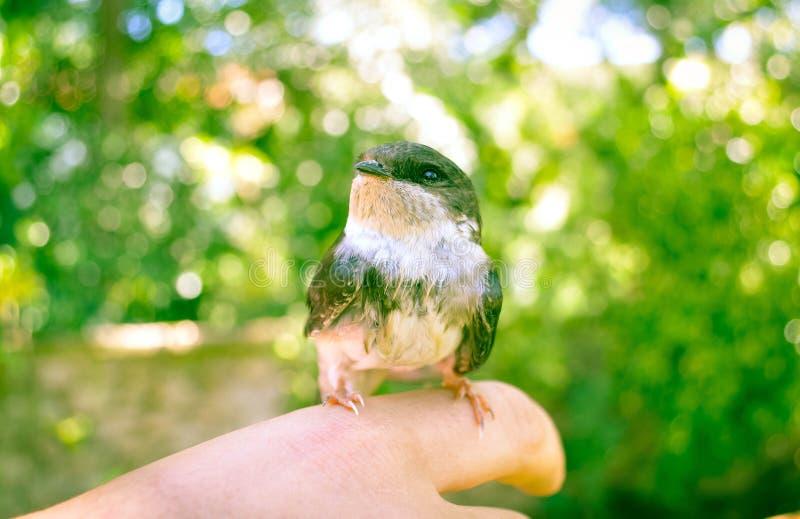 Pássaro na mão fotos de stock