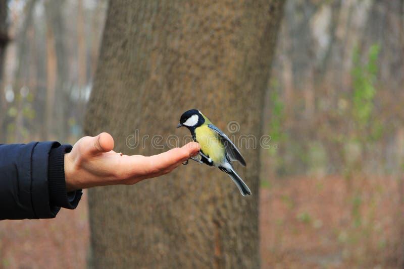 Pássaro na mão imagem de stock royalty free