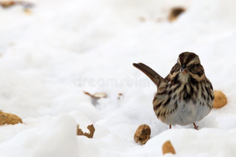 Pássaro na neve imagens de stock