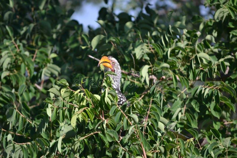 Pássaro na parte superior da árvore imagens de stock royalty free