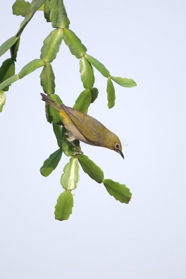 Pássaro na planta verde imagem de stock royalty free