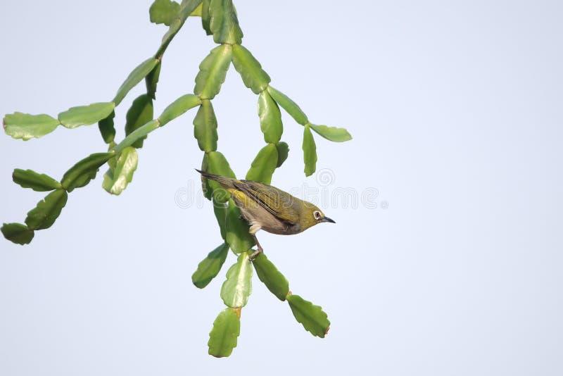 Pássaro na planta verde foto de stock