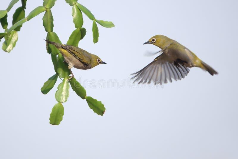 Pássaro na planta verde fotos de stock royalty free