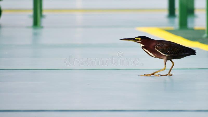 Pássaro na plataforma fotos de stock