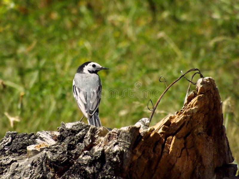 Pássaro na rocha do verão fotos de stock royalty free