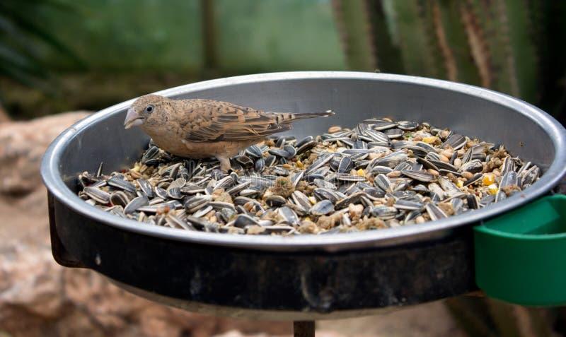 Pássaro no alimentador do pássaro imagens de stock