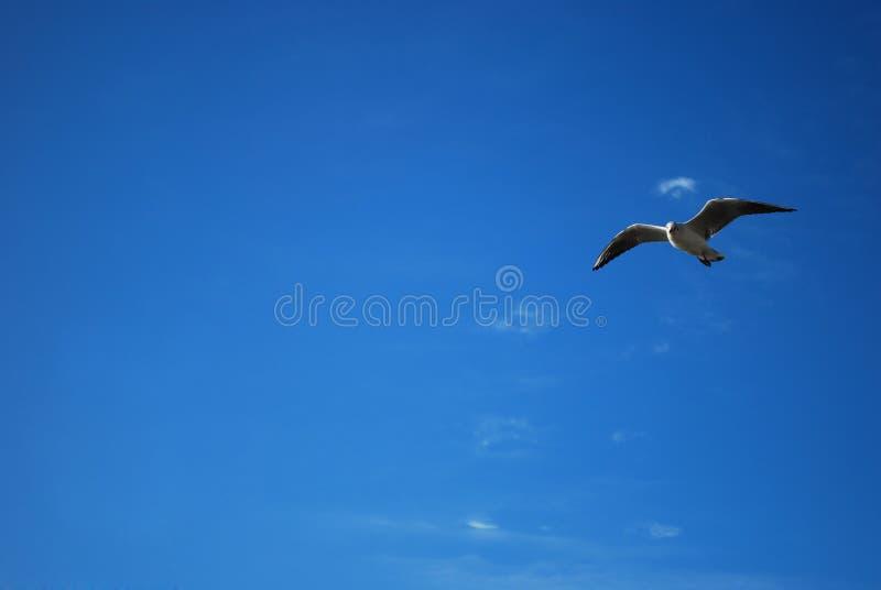 Pássaro no céu foto de stock