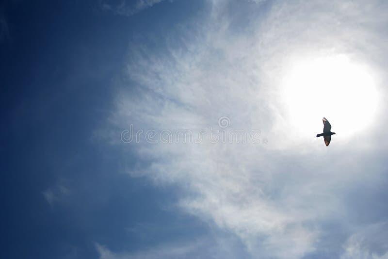 Pássaro no céu foto de stock royalty free
