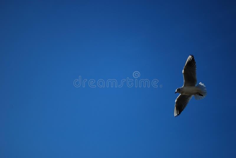 Pássaro no detalhe do céu foto de stock