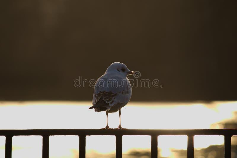 Pássaro no lago imagens de stock
