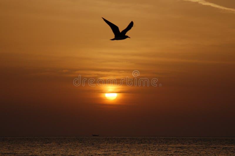 Pássaro no nascer do sol imagem de stock royalty free