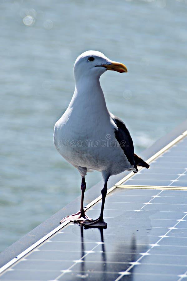 Pássaro no painel solar fotografia de stock
