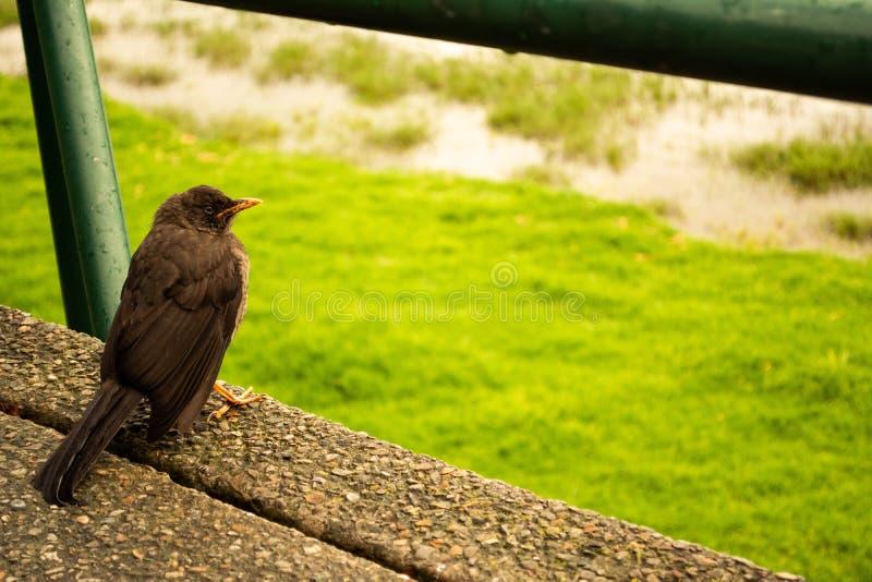 Pássaro no parque em Sunny Day imagem de stock