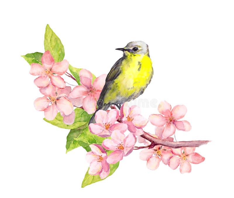Pássaro no ramo da flor com flores watercolor ilustração stock
