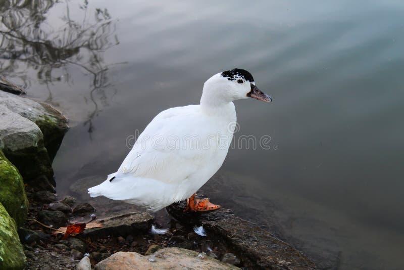 Pássaro no rio de Segua foto de stock royalty free