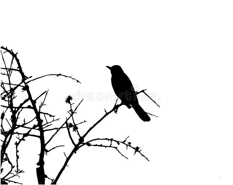 Pássaro no vetor de Sillhouette da árvore ilustração do vetor