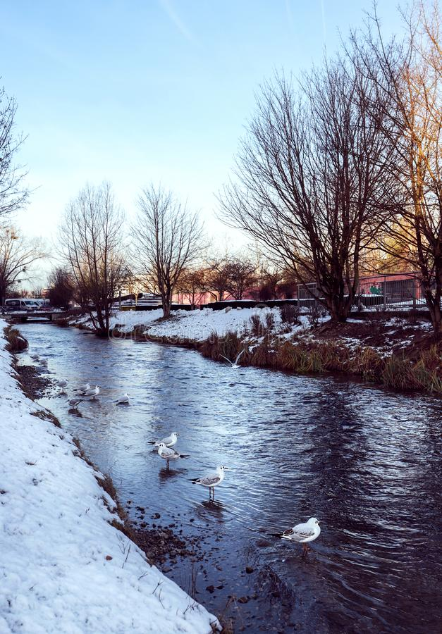 Pássaro pelo lago no inverno imagem de stock royalty free