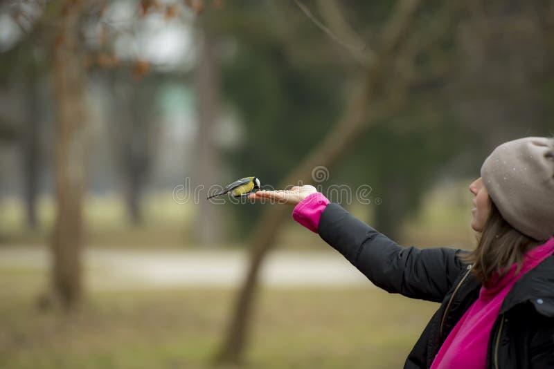 Pássaro pequeno de alimentação da mão foto de stock royalty free
