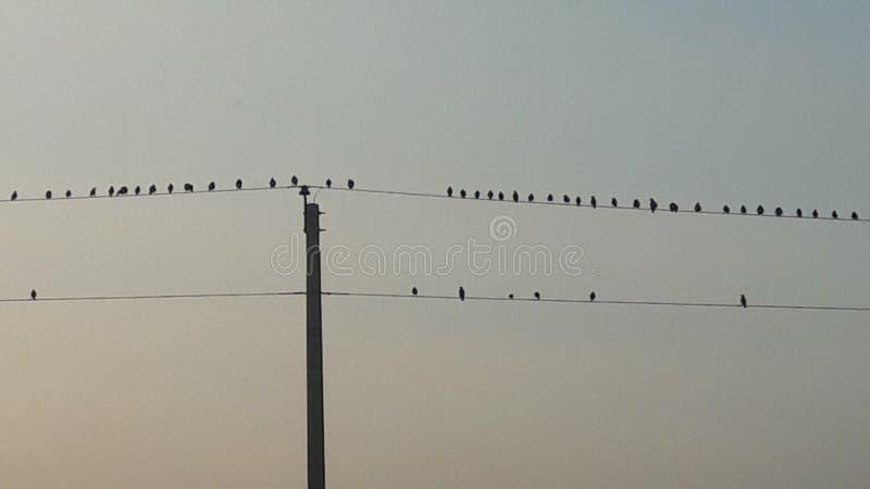 Pássaro pequeno fio estabelecido imagem de stock