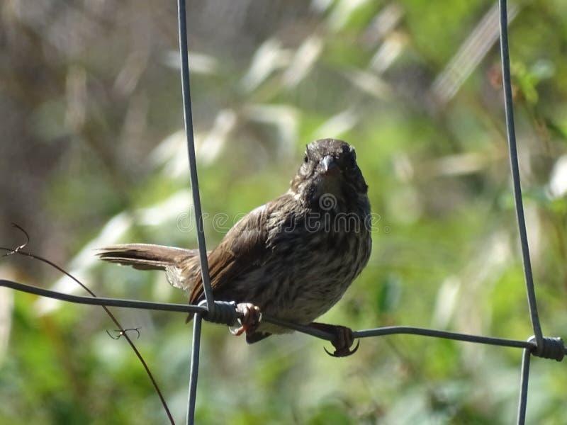 Pássaro pequeno que senta-se na cerca de fio imagem de stock