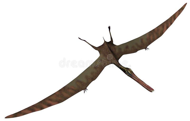 Pássaro pré-histórico de Anhanguera - 3D rendem ilustração do vetor