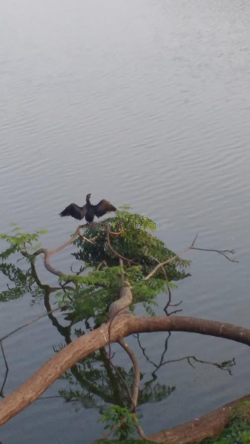 Pássaro preguiçoso que estica ao seu mais completo fotos de stock
