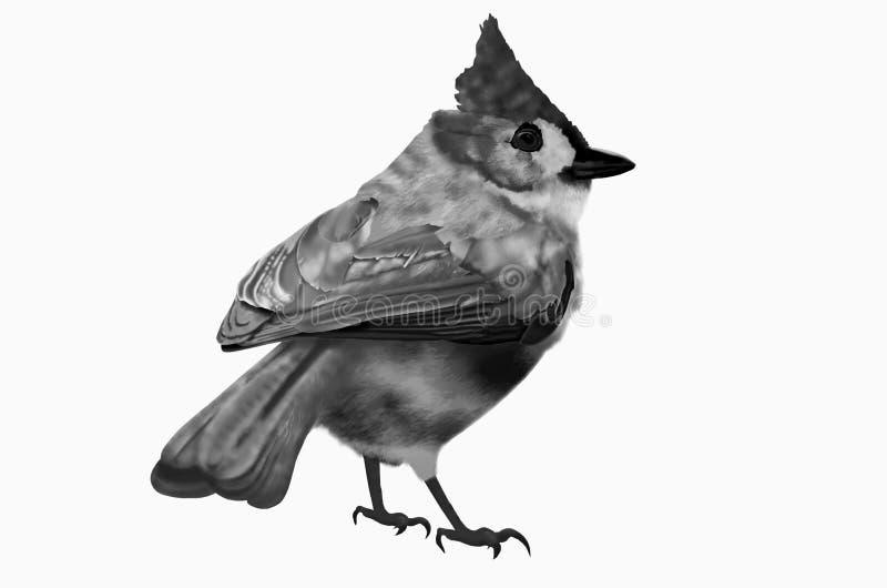 Pássaro preto e branco ilustração royalty free