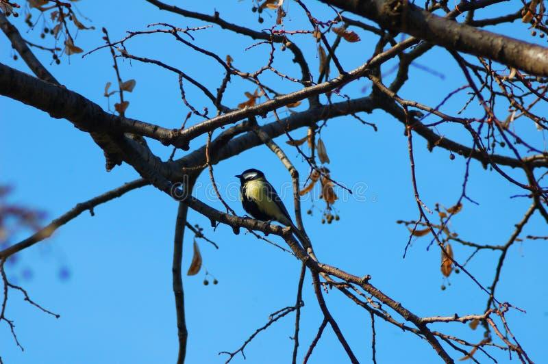Pássaro que senta-se no ramo de uma árvore imagens de stock