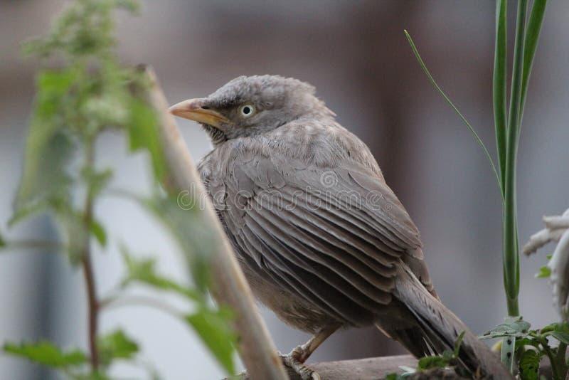 Pássaro que senta-se pelas plantas foto de stock