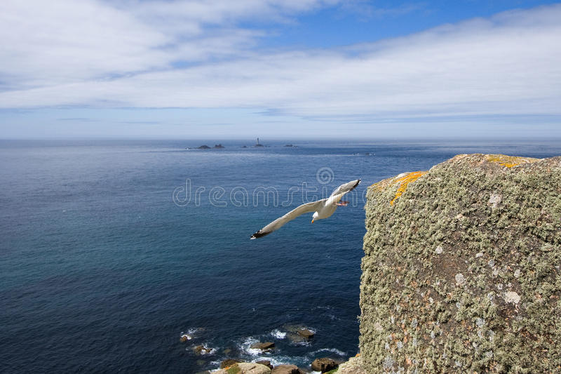 Pássaro que toma o voo de um penhasco em Cornualha imagem de stock royalty free