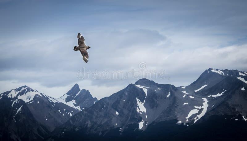 Pássaro que voa sobre montanhas da neve - Ushuaia, Argentina imagem de stock royalty free