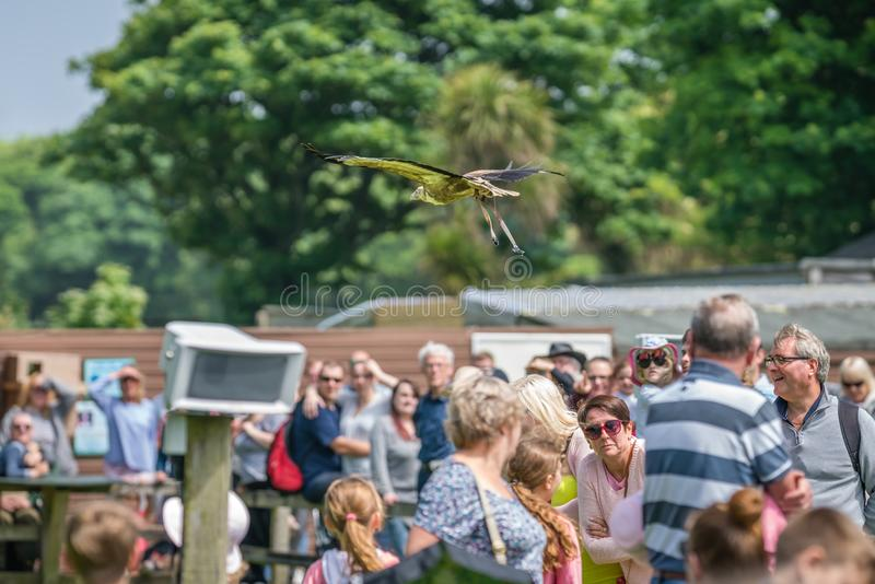 Pássaro que voa sobre a multidão durante a mostra imagens de stock