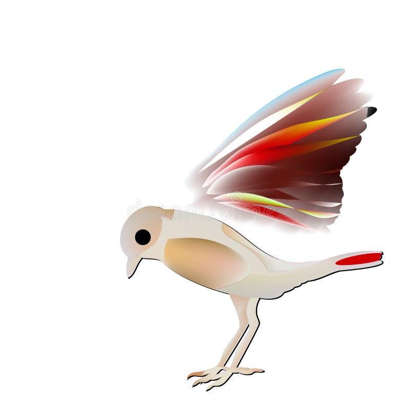 Pássaro raro do passerine, insignis do Saxicola com abdômen vermelho ilustração stock