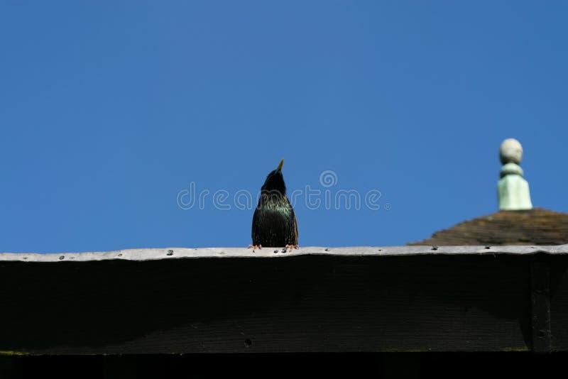Pássaro só foto de stock