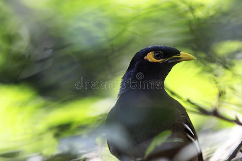 Pássaro só selvagem imagens de stock