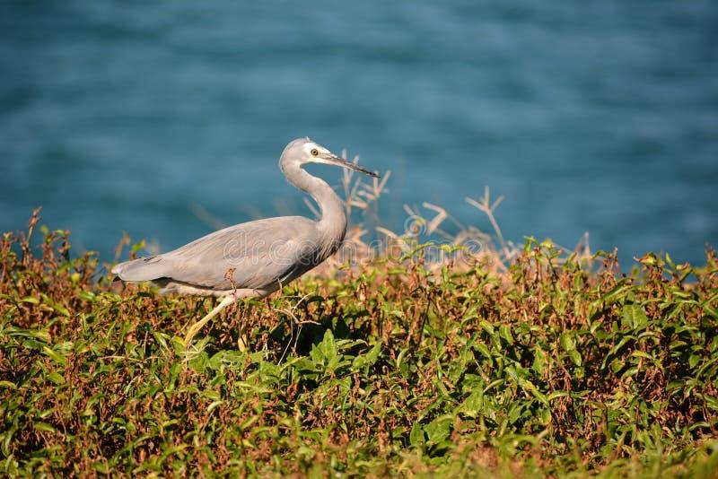 Pássaro selvagem do beira-mar imagem de stock royalty free